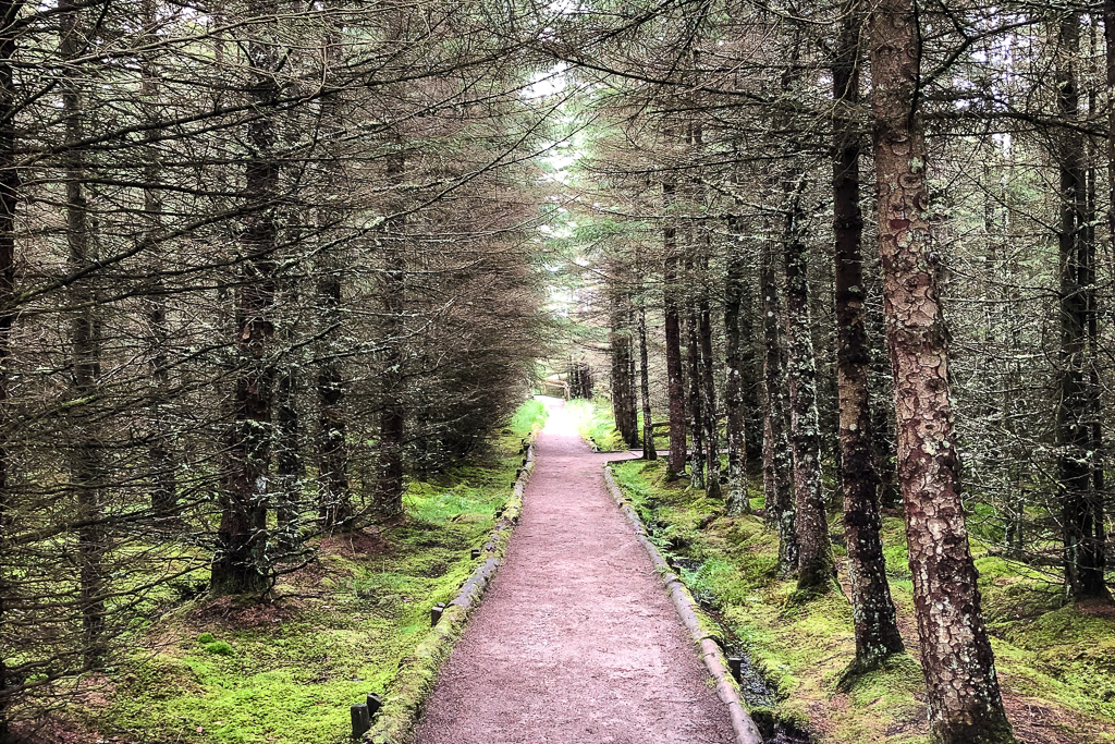 Image of path through dense Scot pine forest. The trees are bare with green moss on the forest floor.